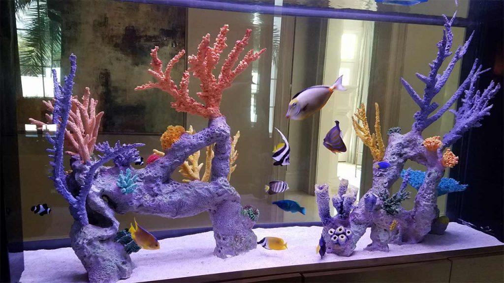 Aquatic-Specialties-Aquarium-Maintenance